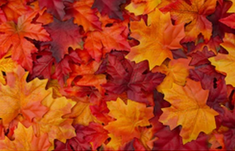 Piknik jesienny